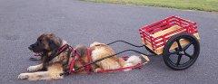 Rafe_cart.jpg